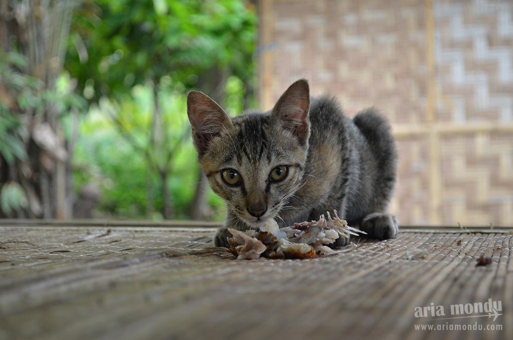 Un chat dans la jungle