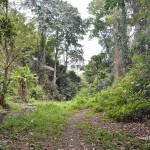 Jungle de Lombok